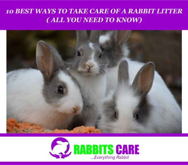 10 Best Ways To Take Care Of a Rabbit Litter ( All you Need to know)