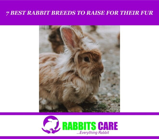 7 Best Rabbit Breeds To Raise For Their Fur