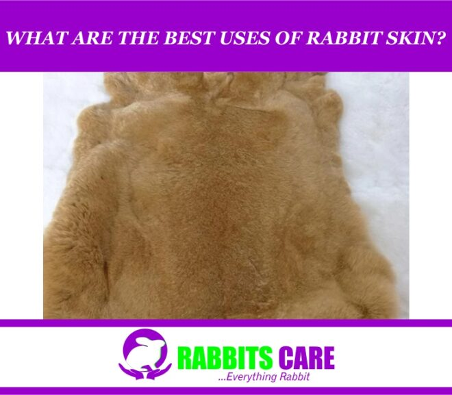 What Are The Best Uses Of Rabbit Skin?