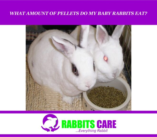 What Amount Of Pellets Do My Baby Rabbits Eat?