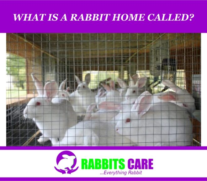 What Is A Rabbit Home Called?