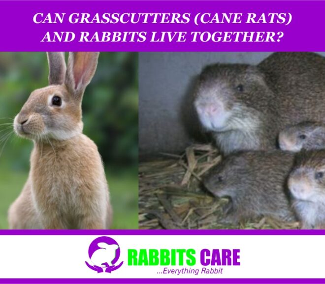 Can Grasscutters (Cane rats) and Rabbits live Together?