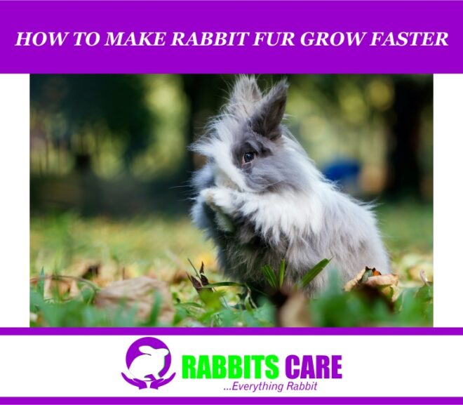How To Make Rabbit Fur Grow Faster