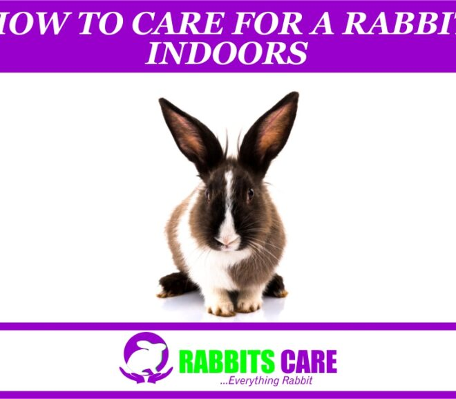 How To Care For A Rabbit Indoors