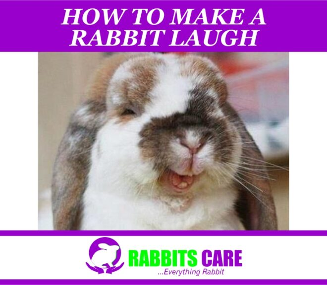 How to Make a Rabbit Laugh