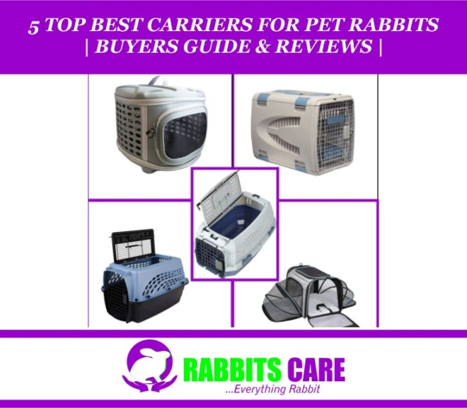 5 Top Best Carriers for Pet Rabbits 2021 | Buyers Guide & Reviews |