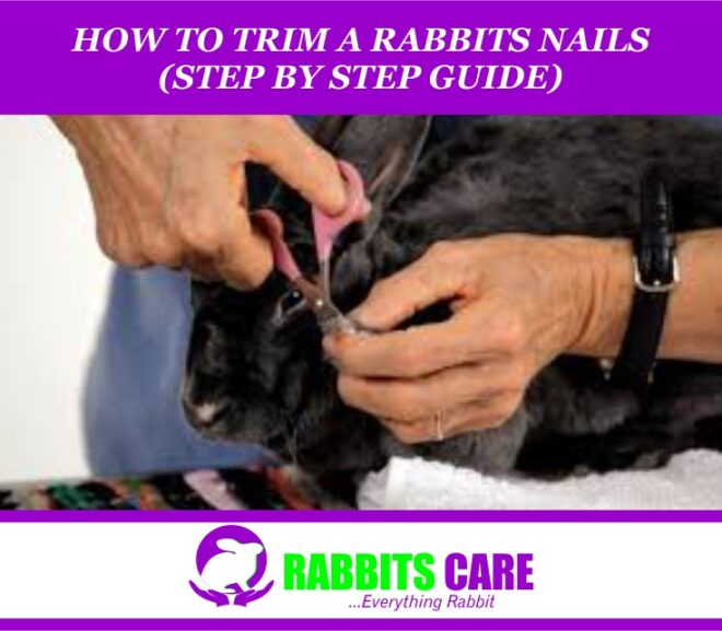 How to Trim a Rabbits Nails (Step by Step Guide)