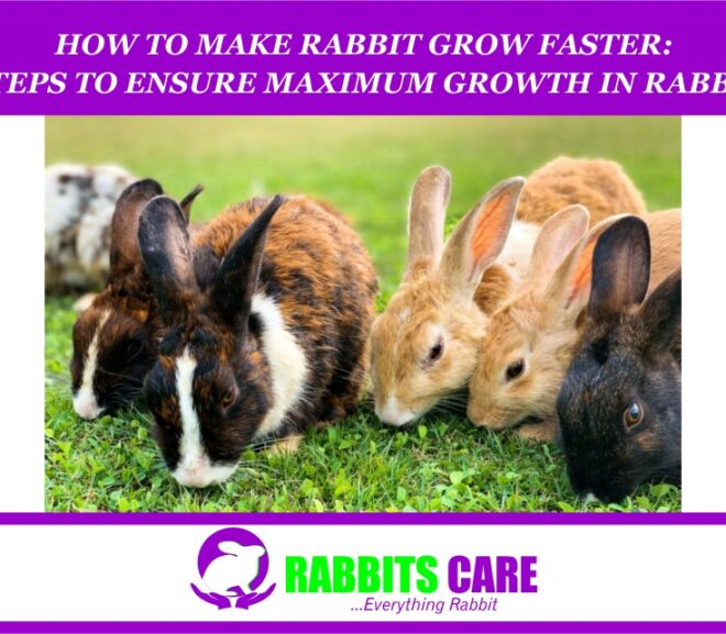 How to Make Rabbit grow faster: 5 Steps To Ensure Maximum Growth In Rabbits