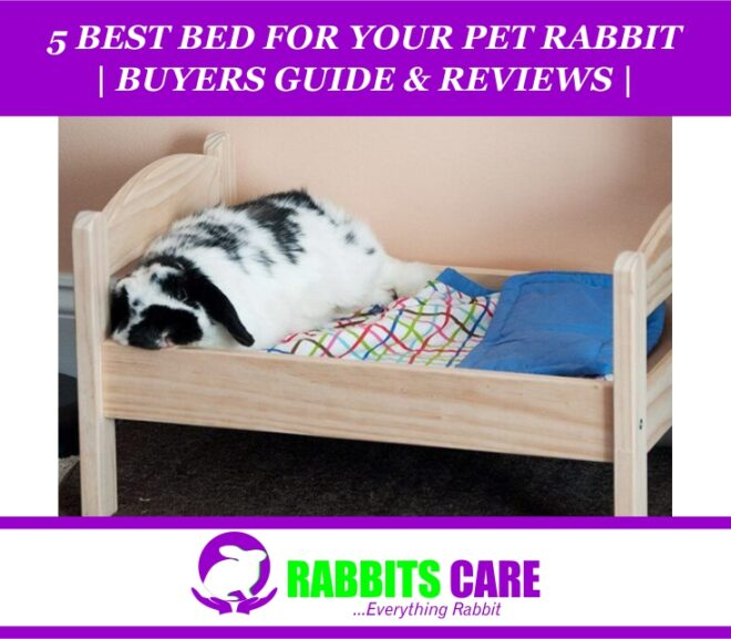 5 Best Bed For Your Pet Rabbit 2021 | Buyers Guide & Reviews |