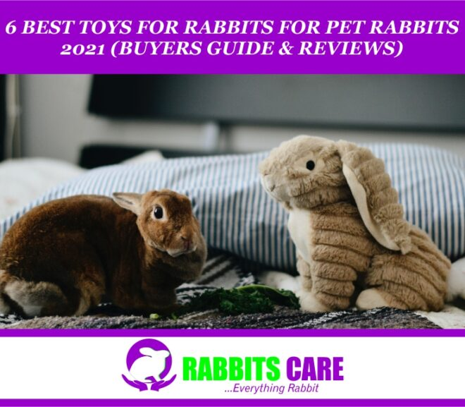 6 Best Toys for Pet Rabbit 2021 ( Buyers Guide & Reviews )