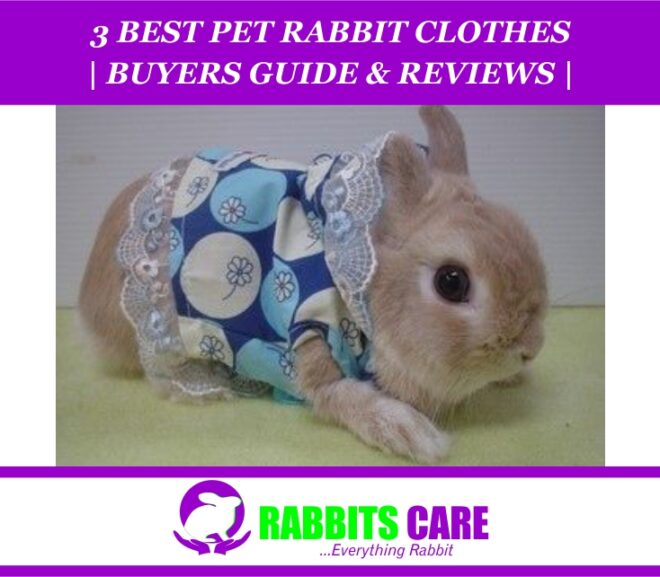 3 Best Pet Rabbit Clothes 2021 | Buyers Guide & Reviews |