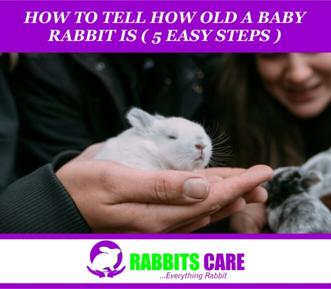 How to Tell How Old a Baby Rabbit Is (5 Easy Steps)
