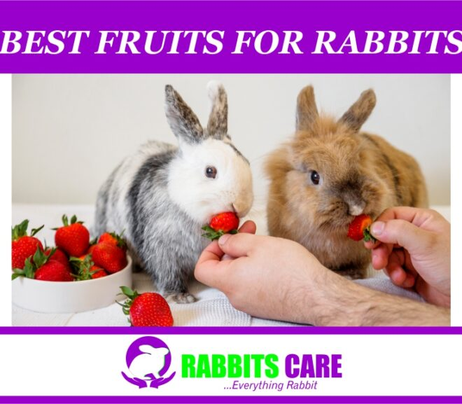 Best Fruits for Rabbits | Healthy feeding |
