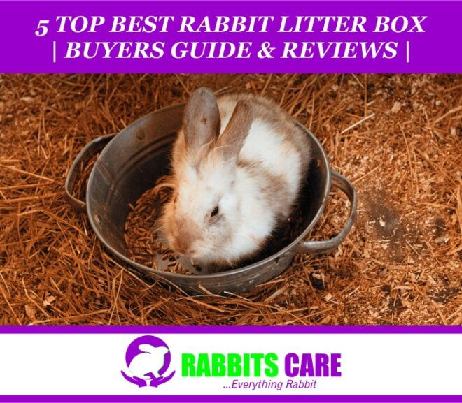 Top 5 Best litter box for rabbit 2021| Buyers Guide & Review |