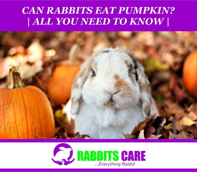 Can Rabbits Eat Pumpkin? (All You Need to Know)