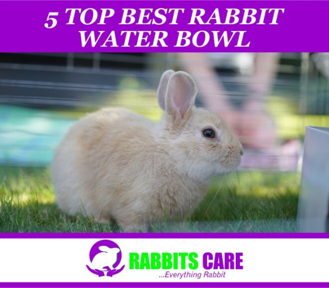 5 Top best Rabbit water bowl 2021 – |  Buyers Guide & Reviews |