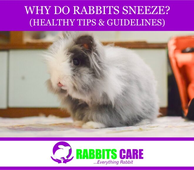 Why do Rabbits Sneeze? (Healthy tips & Guidelines)