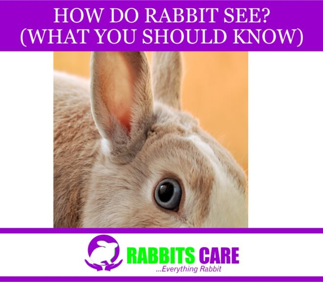 How Do Rabbits See? (What you should know)