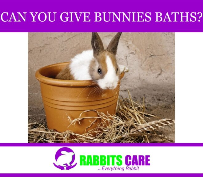 Can You Give Bunnies Baths?