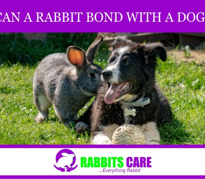 Can a Rabbit Bond With a Dog?