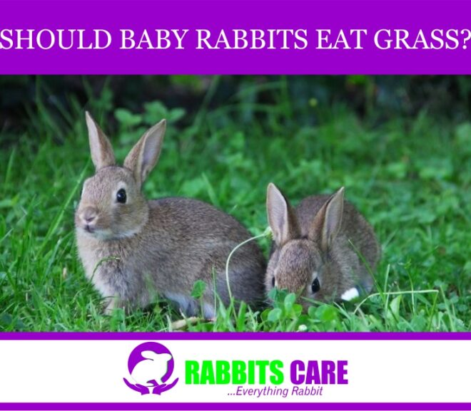 Should Baby Rabbits Eat Grass?