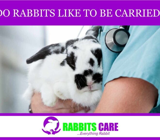 Do Rabbits Like To Be Carried?