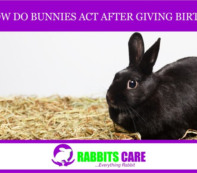 How Do Bunnies Act After Giving Birth?
