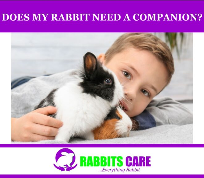 Does my rabbit need a Companion?