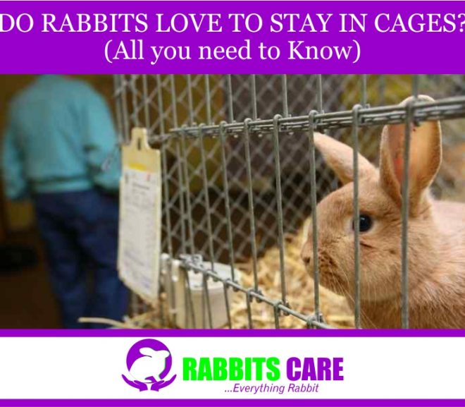 Do Rabbits Love To Stay In Cages? (All you need to Know)