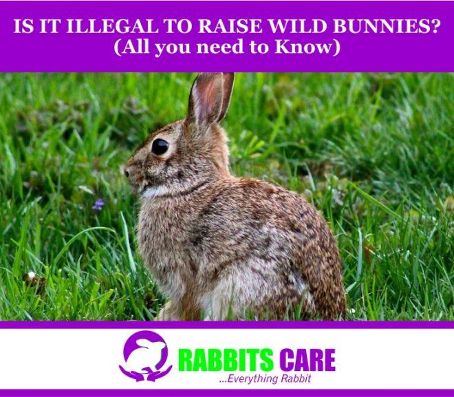 Is It Illegal To Raise Wild Bunnies?