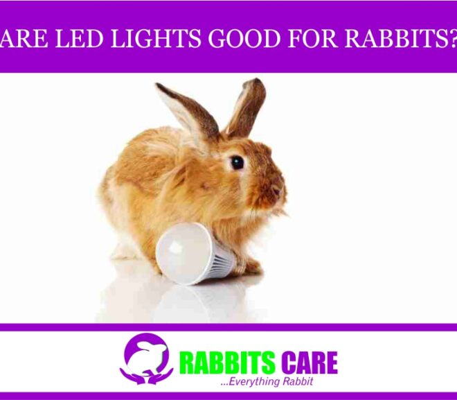 Are led lights good for rabbits?
