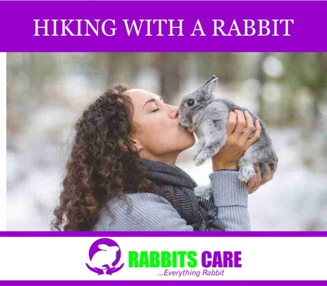 Hiking with a rabbit