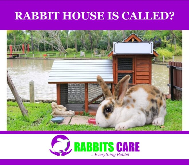 Rabbit house is called