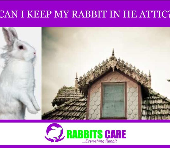 Can I keep my rabbit in the attic