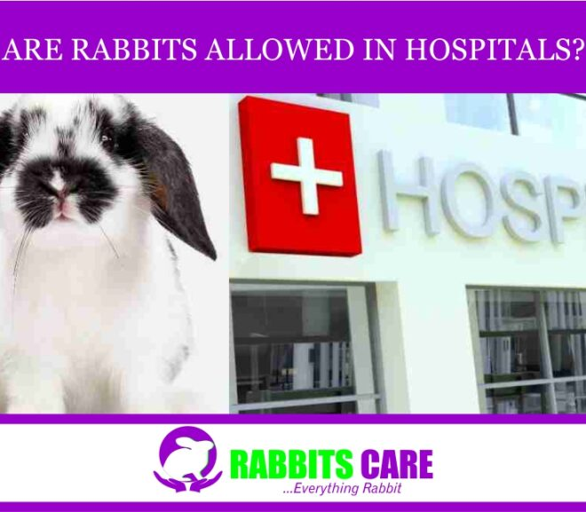 Are Rabbits Allowed in Hospitals?
