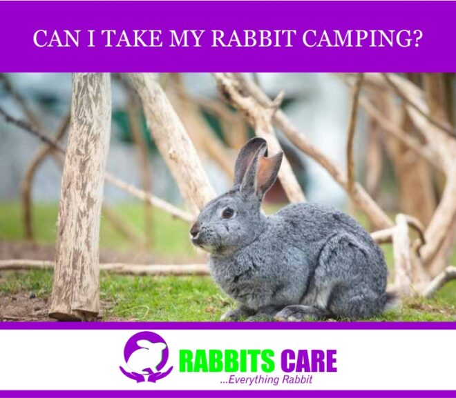 Can I take My rabbit Camping?