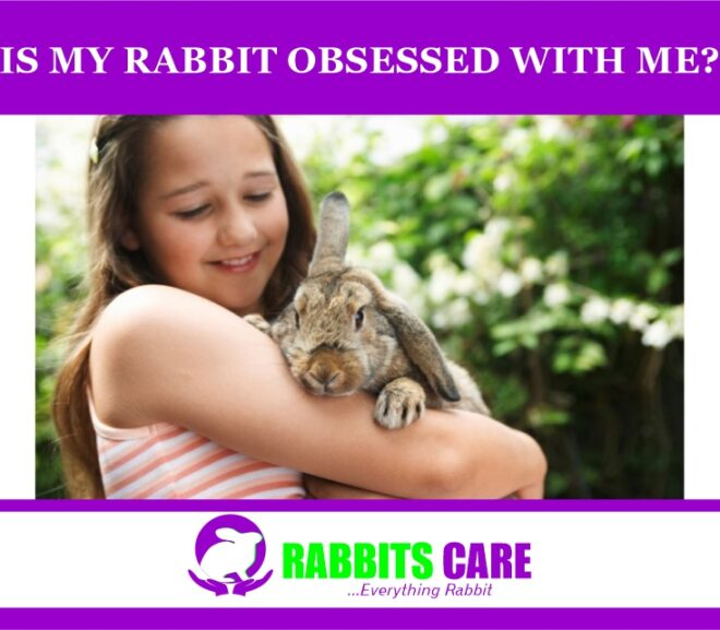 Is My rabbit is obsessed with me?